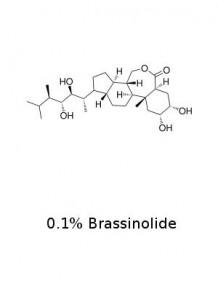 บราสสิโนไลด์ (Brassinolide) 0.1%
